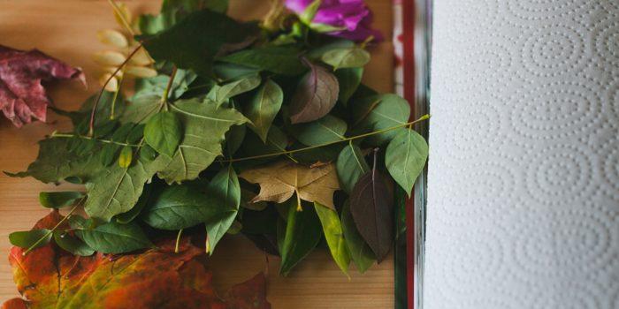 DIY - Pressed Flowers